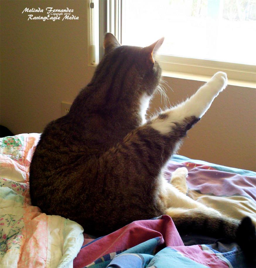 Morning Stretches by RavingEagleMedia