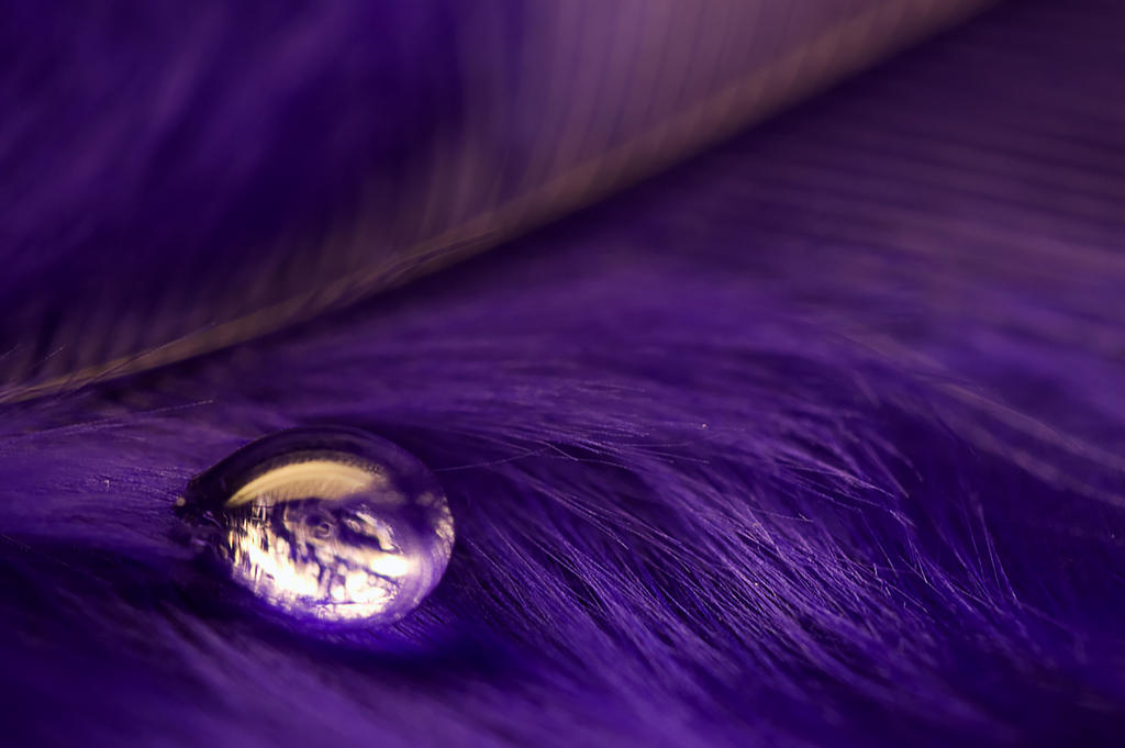Volim ljubičasto - Page 2 Purple_Water_by_nax_08