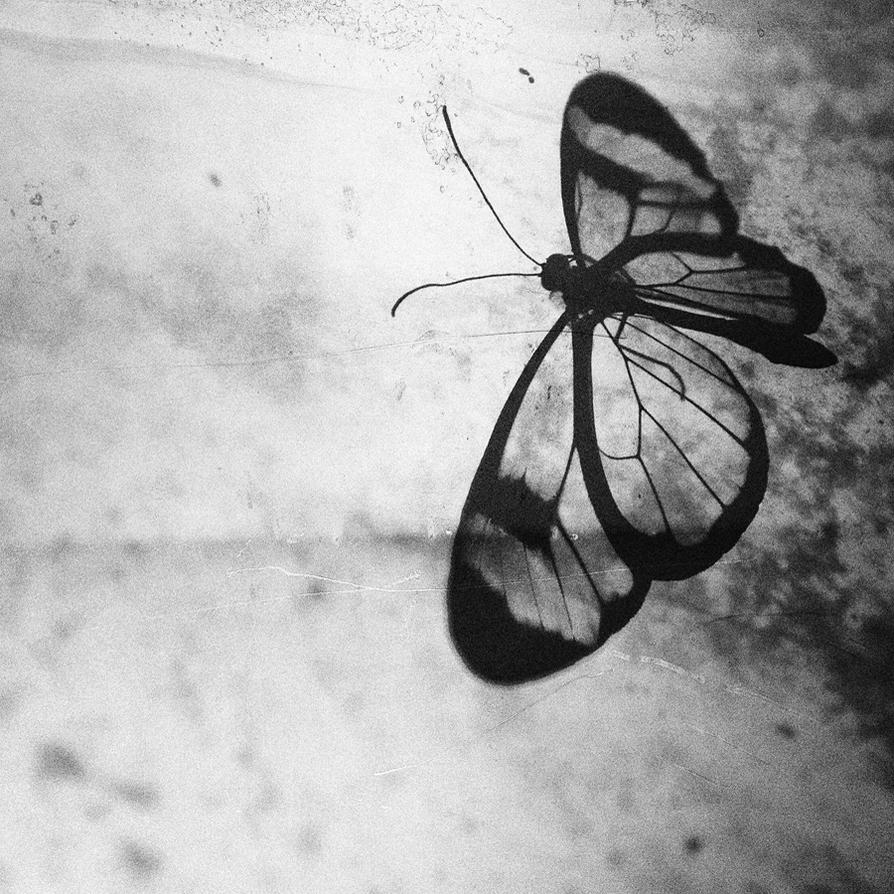 Transparent Beauty by KrzysztofJedrzejak