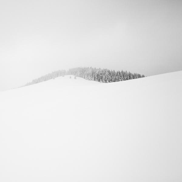 Tiny Little Forest by KrzysztofJedrzejak
