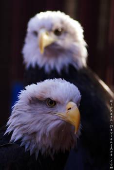 Liberty and Hali