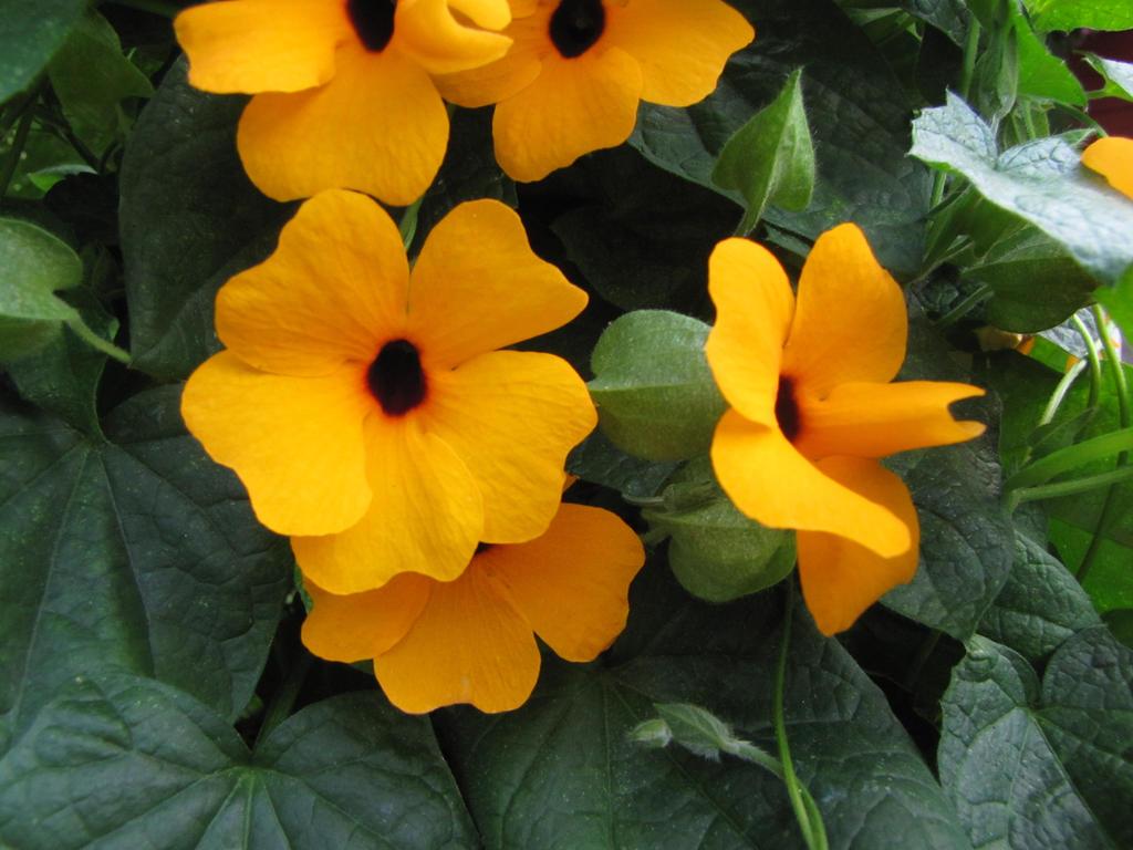 Orange Beauties by Whimseystock