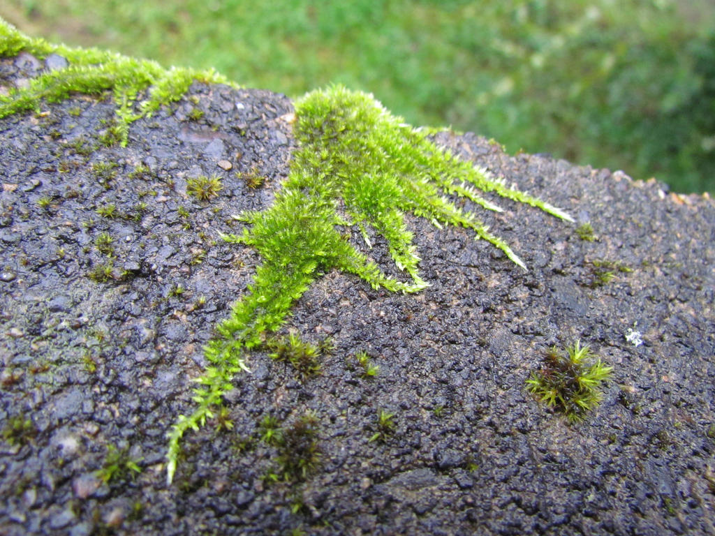 Moss on Rock by Whimseystock