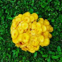 Mycology Color Study
