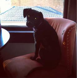 Shadow Pup