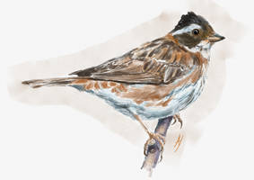 Rustic Bunting by h-i-l-e-x