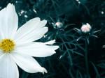 White Flower 1 by a-dinosawr-rawrs