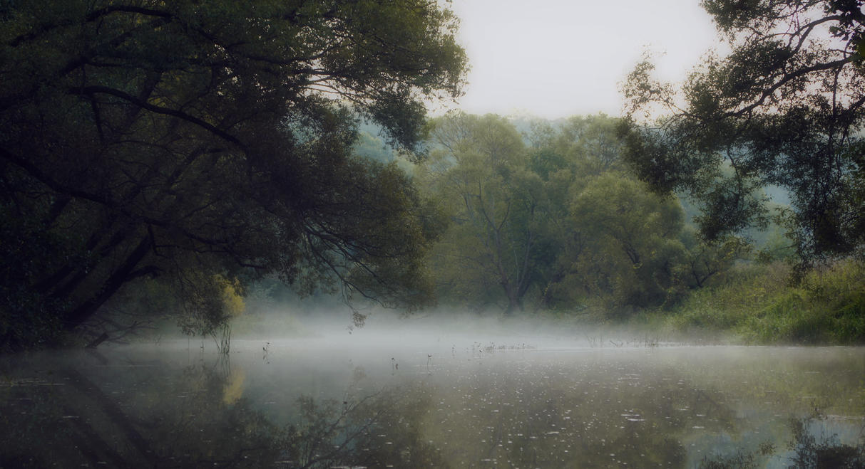 foggy morning by Ilya245