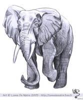 Elephant by lionne-de-matrix