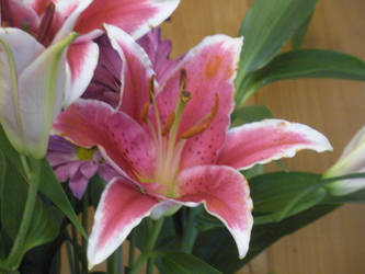 Pretty Pink Lily by PurplePenguinStar360