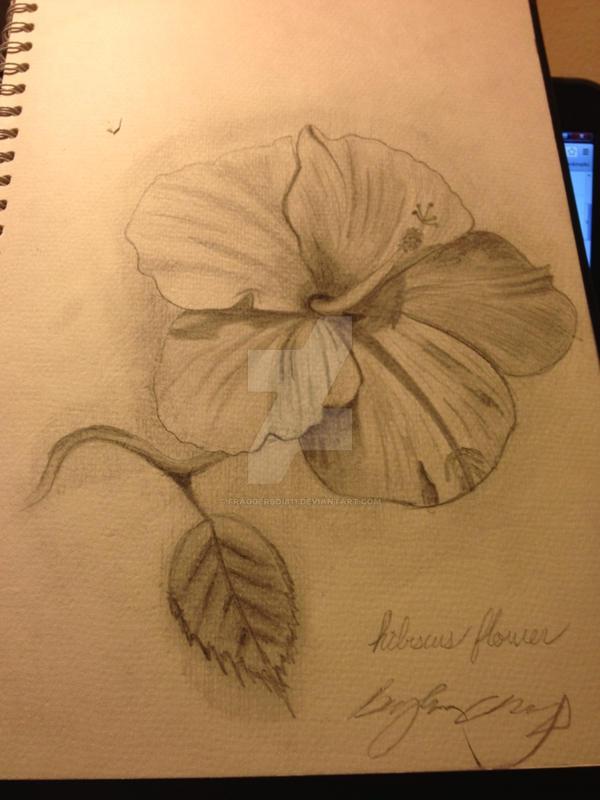 Hibiscus Flower Sketch By Fraggerboi811 On Deviantart