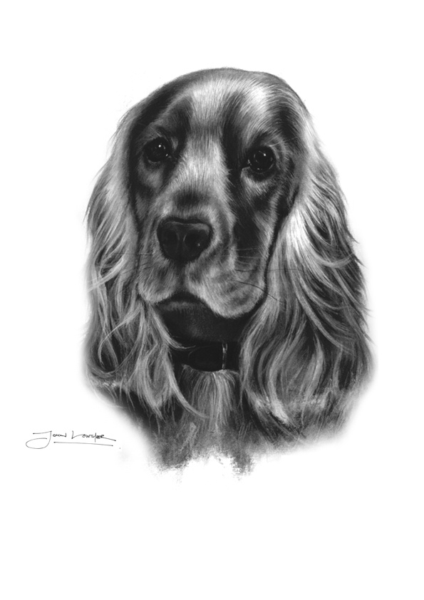 Cocker Spaniel by JALpix