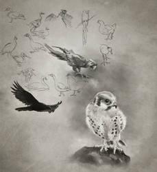 Daily Practice 01 24 2014, Birds