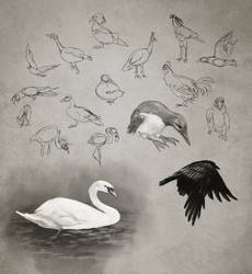 Daily Practice 01 29 2014 Birds