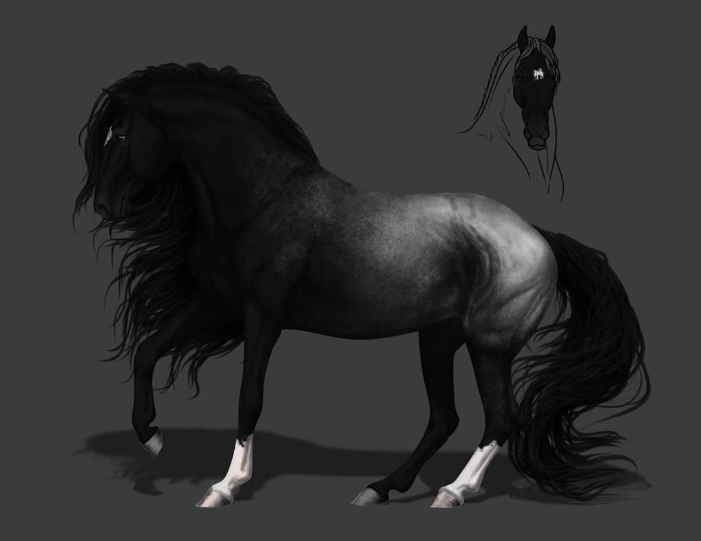 Black Appaloosa