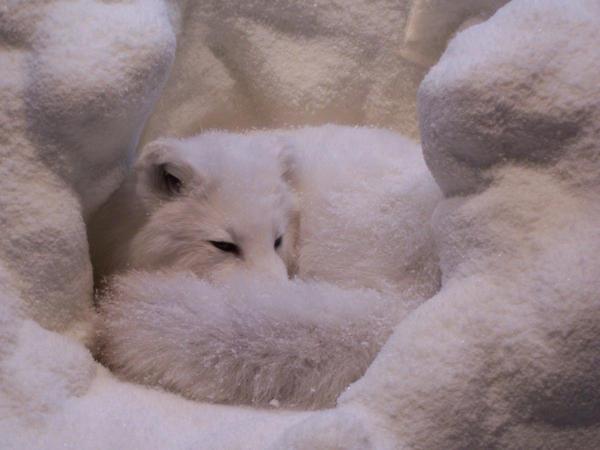 white fox by fenderbender368