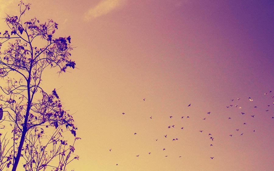 Free Like a Bird by