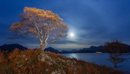 Torridon Tree by Wivelrod