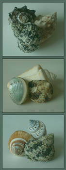 Shell Trios