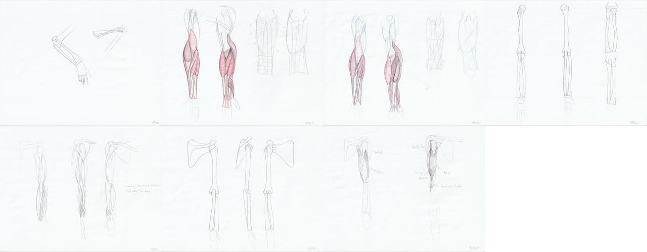 Weekly Anatomy Practice #1