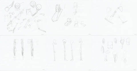 Weekly Anatomy Practice #2