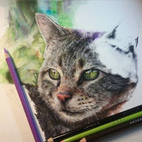 Cat drawing  (work in progress) by SiriuslyArt