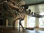Stegosaurus Evades Allosaurus