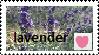 lavender.png love stamp by dracoenator