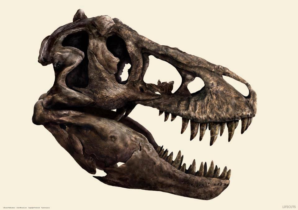 T Rex Skull By Reebkram On Deviantart