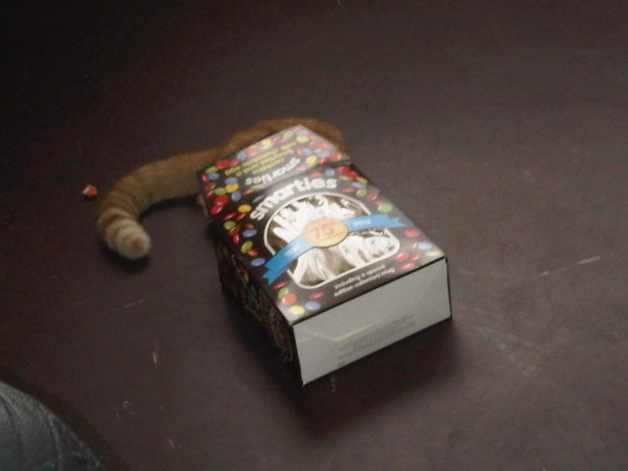 The Cat And Smarties Box By Kirara Souchou