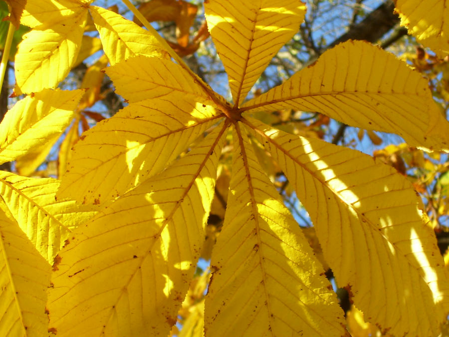 Golden fall by ficwriter