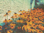 Fleur de Sunshine by cedricthegreat