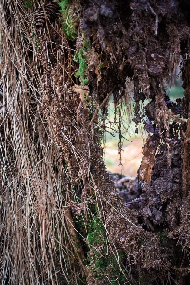 Waldspaziergang (1 von 1) by ZibiPo