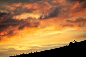 Golden Sunset 05