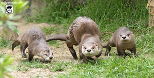 Otters together by jaffa-tamarin