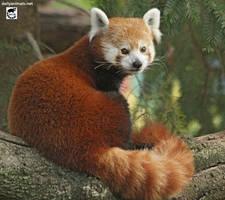 Panda-licious by jaffa-tamarin