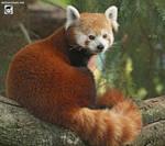 Panda-licious