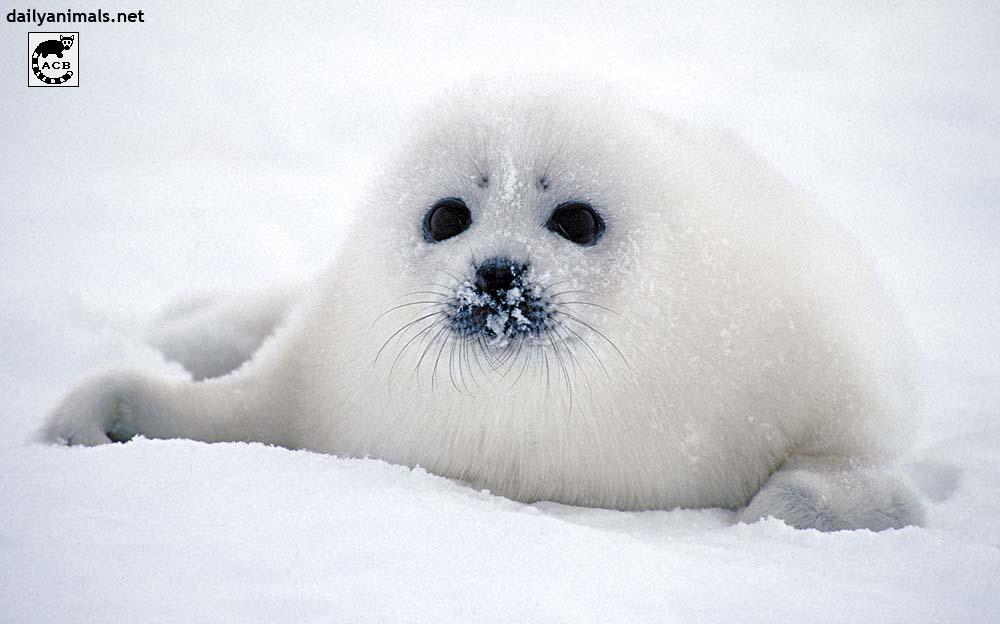 Ice puppy by jaffa-tamarin