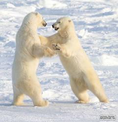 Dance of the white bears (I) by jaffa-tamarin