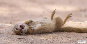 You made a funny! Mongoose ROFL!