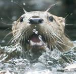 Otter explosion