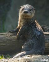 Baby otter by jaffa-tamarin
