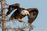 Bald Eagle: prelaunch wing test