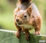 Happy Squirrel Appreciation Day!