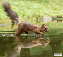 Wet foot forward by jaffa-tamarin