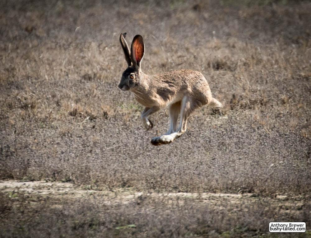 Bunny hop by jaffa-tamarin