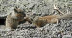 Squirrel nuzzles by jaffa-tamarin