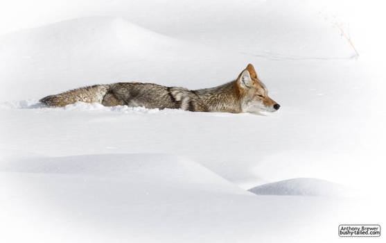 Sinking in the snow