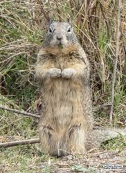 Squirrel watching