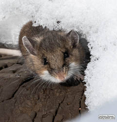 Peeking out from beneath the snow